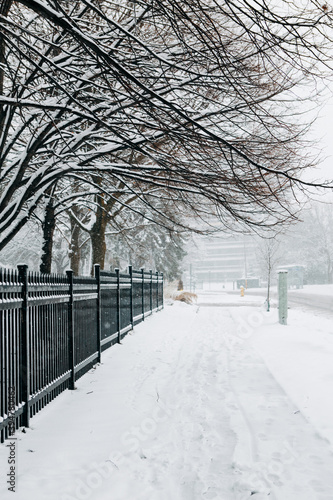 Fototapeta premium Heavy snowfall and snowstorm in Toronto, Ontario, Canada. Snow blizzard and bad weather winter conditions. Empty road street in city or park in winter outdoors. Beauty in nature landscape.