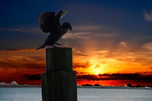 Silhouette Of Cormorant On Piling