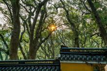 Forest And The Sun With Golden Light In The Putuoshan Mountains, Zhoushan Islands,  A Renowned Site In Chinese Bodhimanda Of The Bodhisattva Avalokitesvara (Guanyin)