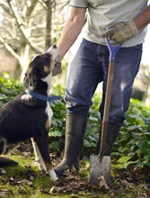 Man Holding Spade Standing In Garden And Patting Dog