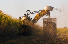 Heavy Machinery Harvesting Mature Sugarcane Into Mobile Cage