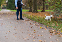 Caucasian Man Is Walking His Small White Dog In The Park
