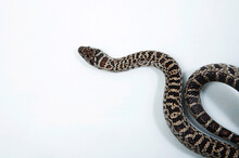 High Angle View Of Black Snake Over White Background