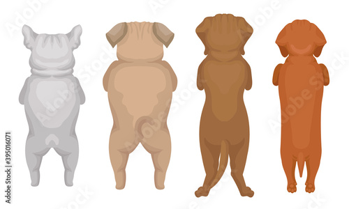 Obraz Dogs of Different Breeds Standing on Hind Legs Vector Set - fototapety do salonu