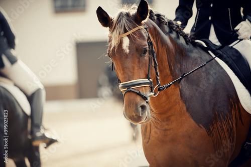 Photo Equestrian sport
