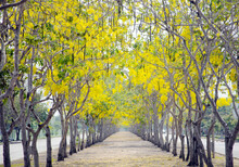 Footpath Amidst Trees In Park During Autumn