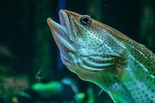 Fish Face Talking Like A Fish In Spongebob Squarpants