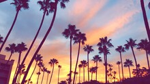 Low Angle View Of Silhouette Palm Trees Against Cloudy Sky During Sunrise