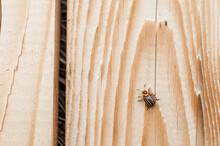 Potato Beetle On The Wooden Texture