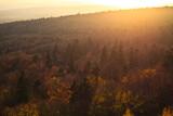 Fototapeta Na ścianę - Kolorowy las o zachodzie słońca