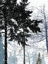 Trees In Snow Winter Grey Illustration