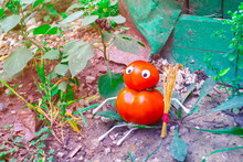 Funny Figure From Tomatoes In The Garden