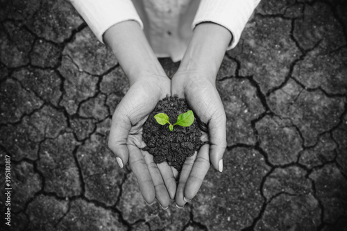 Hand holding growing tree, with cracked arid soil background Fototapete