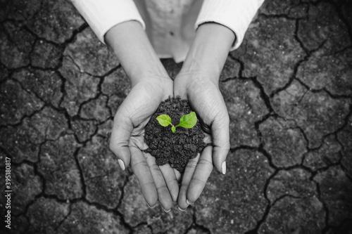 Obraz na płótnie Hand holding growing tree, with cracked arid soil background