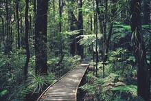 View Of Trees In Rainforest