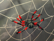 Halloween Toy- Creepy Fake Spider On The Net