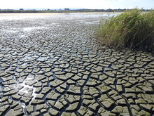 Dry Lake. Ecological Catastrop...
