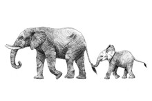Beautiful Stock Pencil Illustration With Safari Elephant Family.