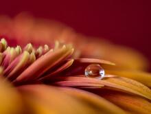 One Waterdrop On Flower Petal,...