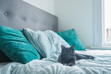 Black Cat Lying On Bed With Gr...