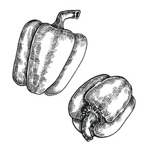 Hand Drawn Black And White Crosshatch Vector Illustration Of Two Bell Peppers. No Background.