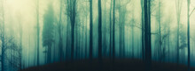 Creepy Beech Trees Forest In Jeseniky Mountains At Autumn. Gloomy Hilly Foggy Landscape, Tree Trunks. Jeseniky Mountains, Eastern Europe, Moravia.  .