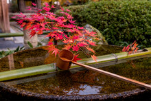 "Beautiful ""Flower Hand Water"" Decorated With Red Maple Leaves, Is A Place For Washing Hands In Temples In Japan Before Entering The Temple."