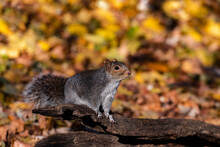 An Isolated Squirrel Is Seen S...