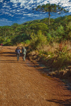 People Hiking On Dirt Pathway Through Forest At Aparados Da Serra National Park Near Cambara Do Sul. A Small Country Town In Southern Brazil With Amazing Natural Tourist Attractions. Oil Paint Filter.