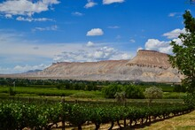 Winery In Palisades, Western Colorado With The Book Cliff Mountains And Blue Sky In The Background.