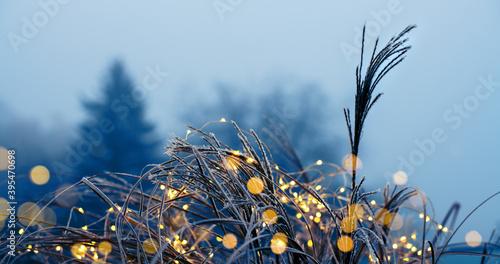 Weihnachtlicher Garten- tausende Lichterin gefrorenen Gräsern vor kahlen Bäumen in der Adventszeit
