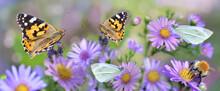 Butterfly Gathering  Pink  Flowers In A Garden