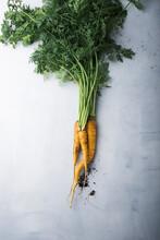 A Freshly Harvested Yellow Carrot (daucus Carota)