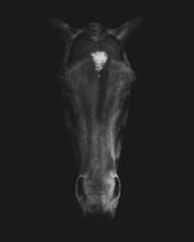 Grayscale Closeup Shot Of A Horse Head