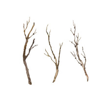Set Of Dry Wood Branches. Hand Drawn Watercolor Illustration.