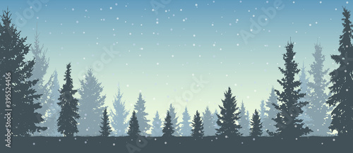 Winter forest and snowfall, silhouettes beautiful snowy Christmas trees. Vector illustration