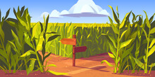 Green Maize Plants And Sandy Road Between Corn Fields, Wooden Post With Arrows And Traffic Signs. Farm Agricultural Landscape, Natural Scene Cartoon Vector Illustration.
