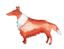 Watercolor Image Of Rough Collie