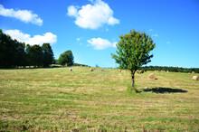 Beskid Niski Letnie Pole Drzewo. Summer Mountain Landscape.