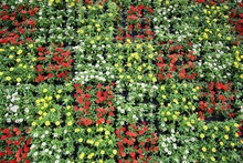 規則的に花が並んだフラワーウォール