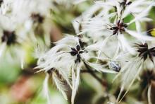 Plante Légère Avec Des Plumes Dans Le Jardin - Arrière Plan Floral Et Fond Flou