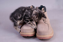 Chaton Et Chaussures
