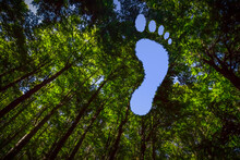 The Canopy Of This Forest Has Hole In The Shape Of A Barefoot Footprint