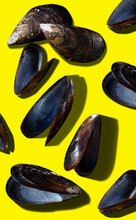 Empty Mussel Shells On A Yellow Surface
