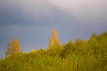 Ujęcie Wierzchołków Drzew W Pięknym świetle Zachodzącego Słońca