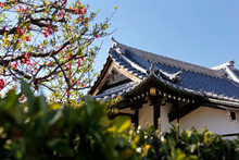 Japanese Temple Roof. Details Of The Roof And Tree. Bright Weather. April 2015.
