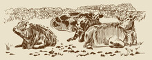 Cows In Field Dry Stone Wall Paddock Hand Drawn Sketch. Farm Rural Landscape. Vector Illustration