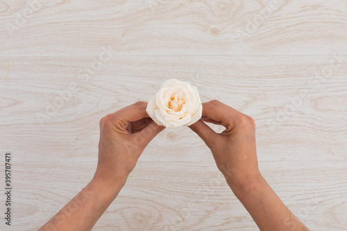 Fototapeta premium High angle view of person holding white rose on wooden background