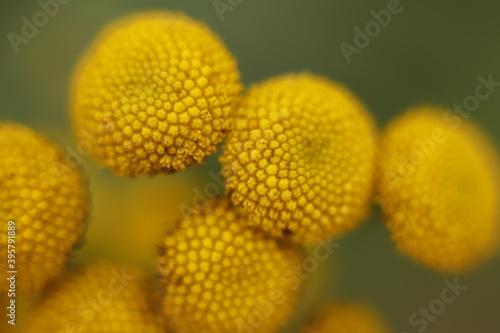 Obraz żółte kwiatki makro jesień - fototapety do salonu
