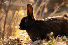 Rabbit Sits In The Autumn Grass
